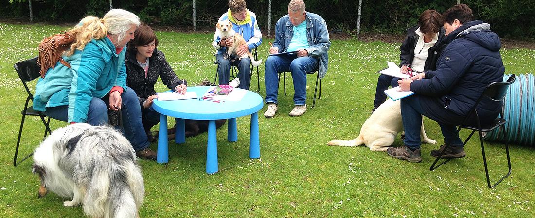 workshop spiegelen met honden